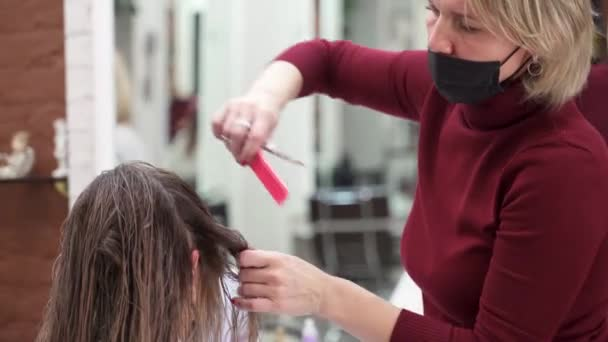 a master in a beauty salon combs the clients wet hair and shaves off the ends with scissors