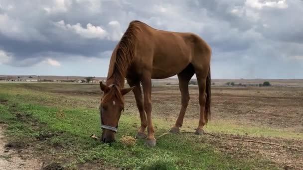 gyönyörű barna ló közelkép eszik füvet a pályán a háttérben a sötét viharos ég