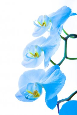 Orchid, different kinds of orchids
