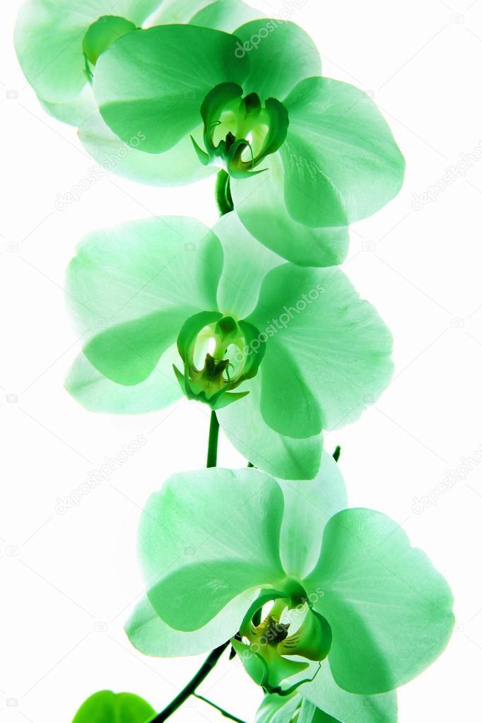 Orchidee, verschiedene Arten von Orchideen — Stockfoto © Yauhen04 ...
