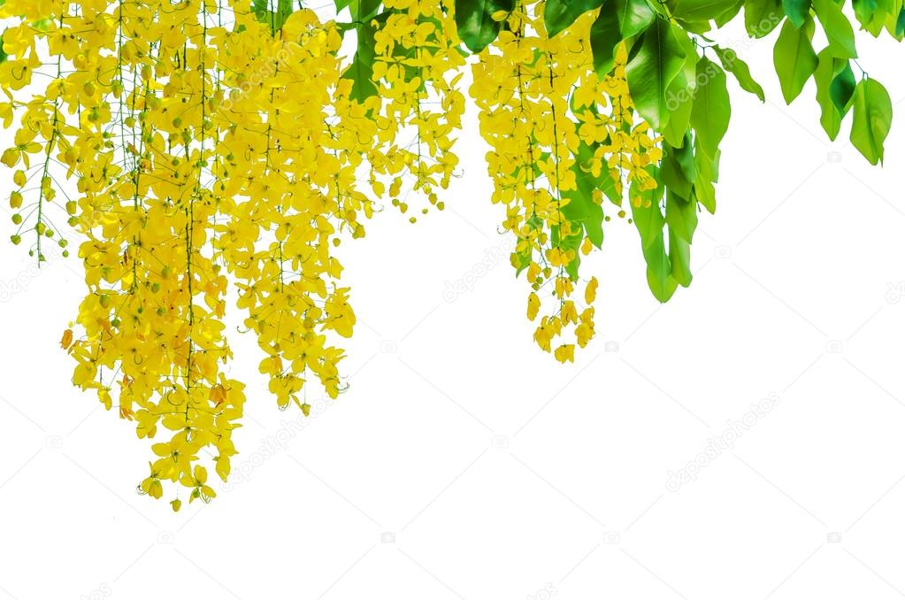 Golden shower closeup