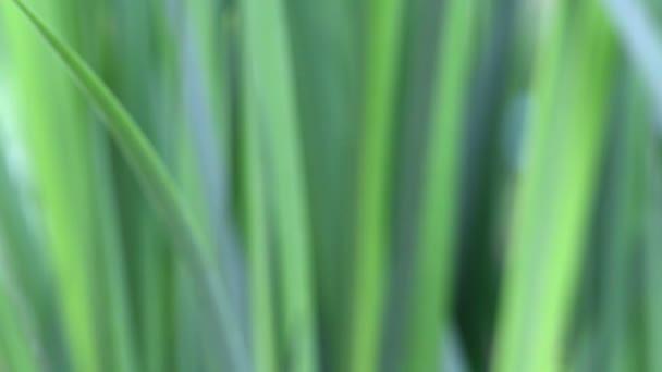 Abstraktní pozadí s Bushem blured zelené listy