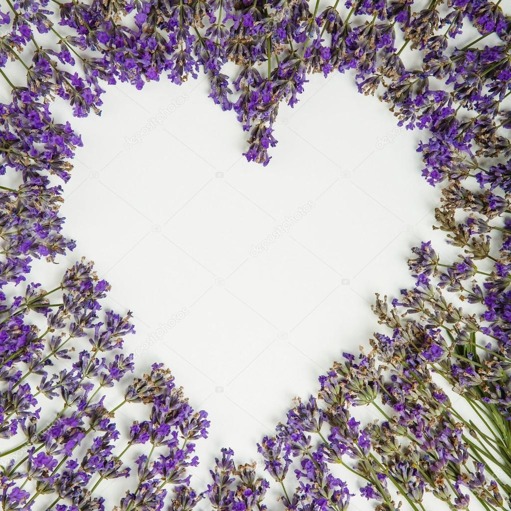 fresh lavender heart isolated on white background