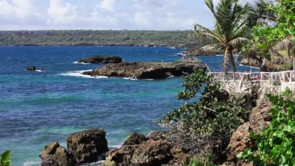 Tropické pobřeží s palmovými stromy a skály