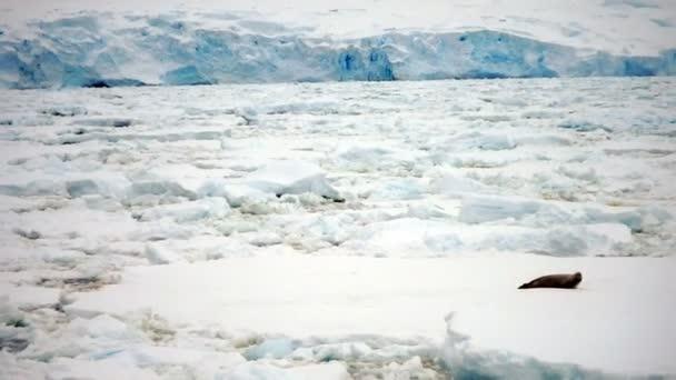 A jégtábla tömítés