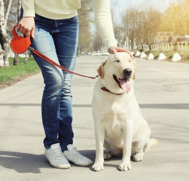Owner and happy labrador retriever dog outdoors walking in summe