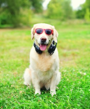 Golden Retriever dog in sunglasses with headphones listens to mu