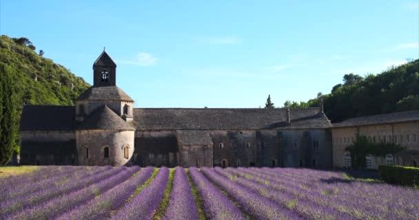 Senanque, Francie - 5. července 2020: Kvetoucí fialové levandulové pole vedle slavného středověkého opatství Senanque
