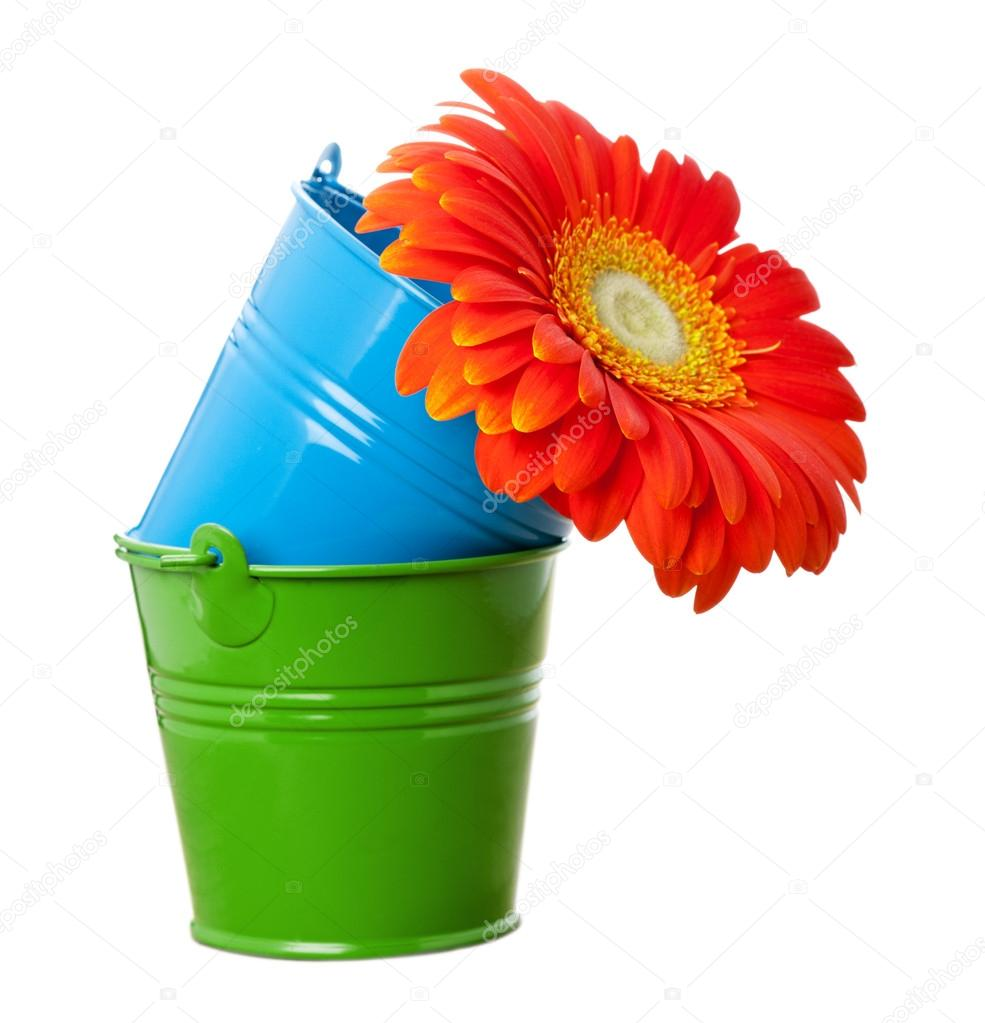 Orange Gerbera Daisy Flower And Multicolor Buckets Stock Photo