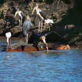 Skupina Marabu