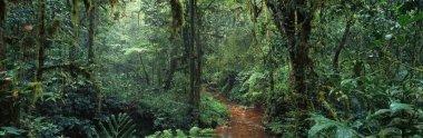 "Картина, постер, плакат, фотообои ""Живописное африканские джунгли"", артикул 82362454"