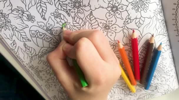Függőleges videó. Valaki fiatal kéz festi minták anti-stressz színező oldalak egy zöld ceruzával, és színes ceruzák mellette. Zen művészet, firka minták fekete-fehér. Zen kusza koncepció