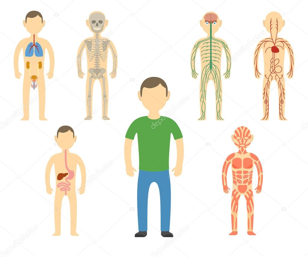 Anatomía de dibujos animados hombre cuerpo — Archivo Imágenes ...