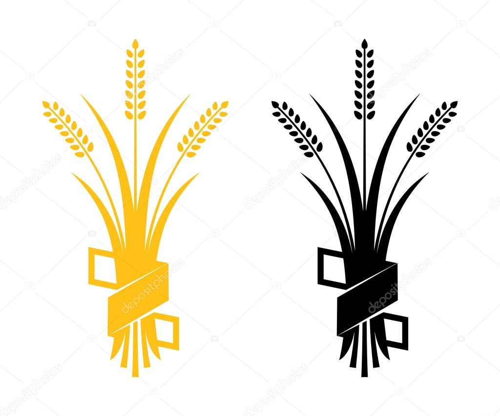 ears of wheat barley or rye vector visual graphic icons ideal for rh depositphotos com vector barley and hops barley hop vector