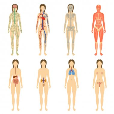 Set of human organs and systems of the body vitality.