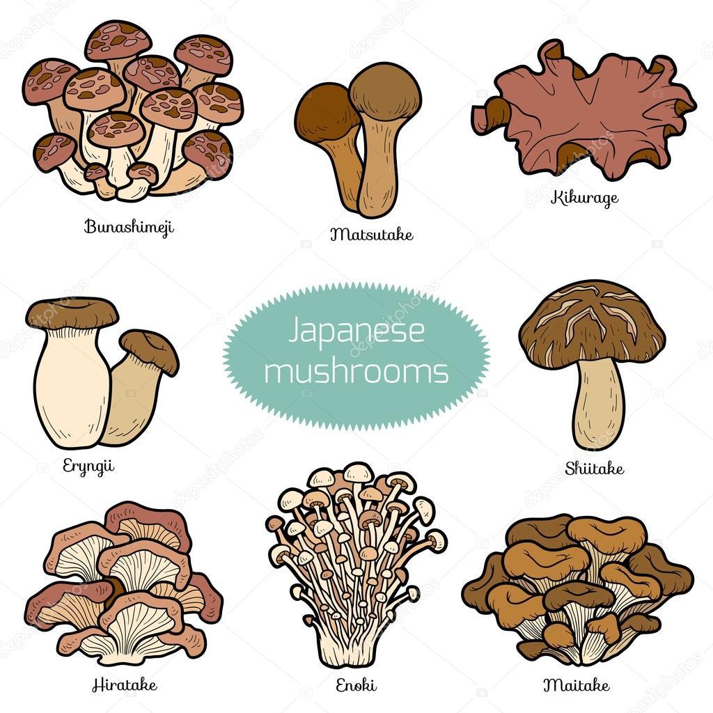Set of japanese mushrooms
