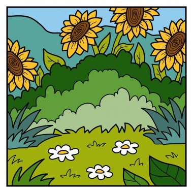 Vector color background, meadow with sunflowers