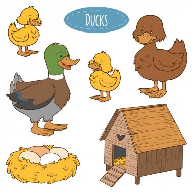 Set of cute farm animals and objects, vector family duck, colori