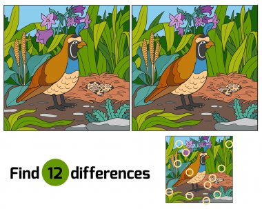 Find differences (quail and background)