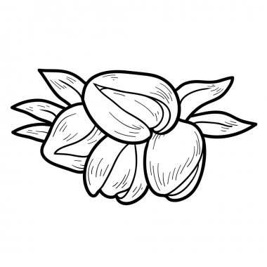 Coloring book: fruits and vegetables (pistachios)