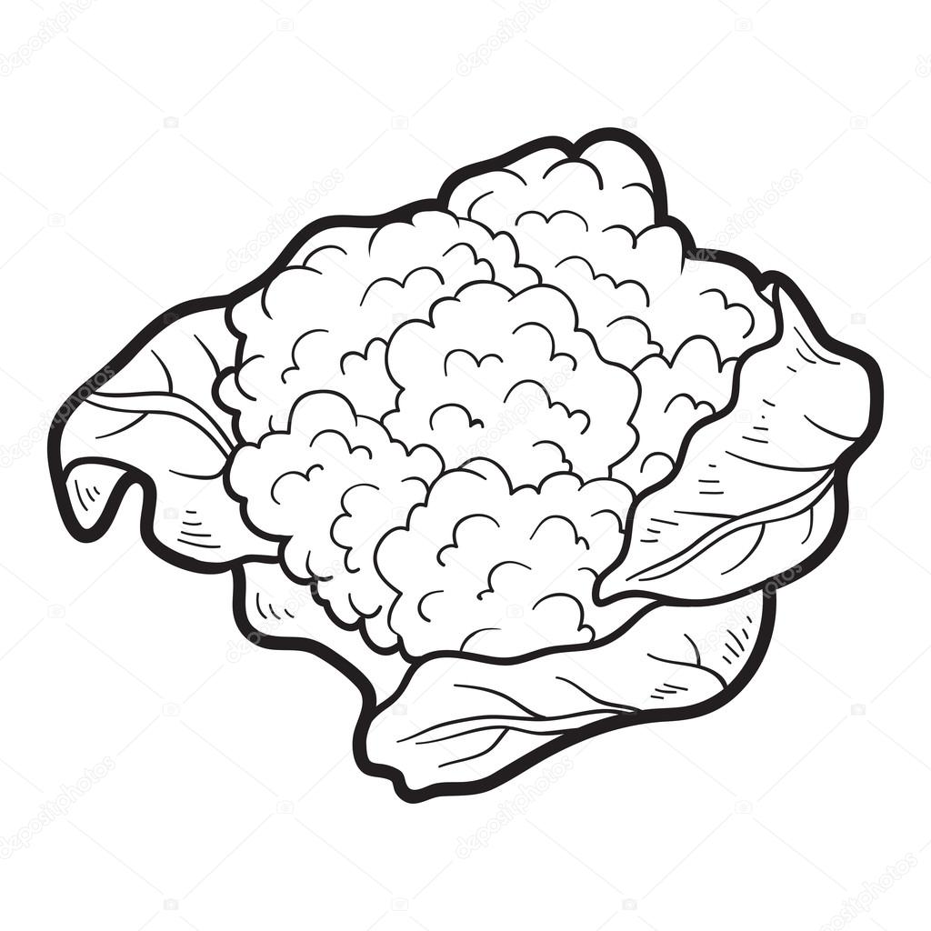 Coloring Book For Children Fruits And Vegetables Cauliflower Vector By Ksenya Savva