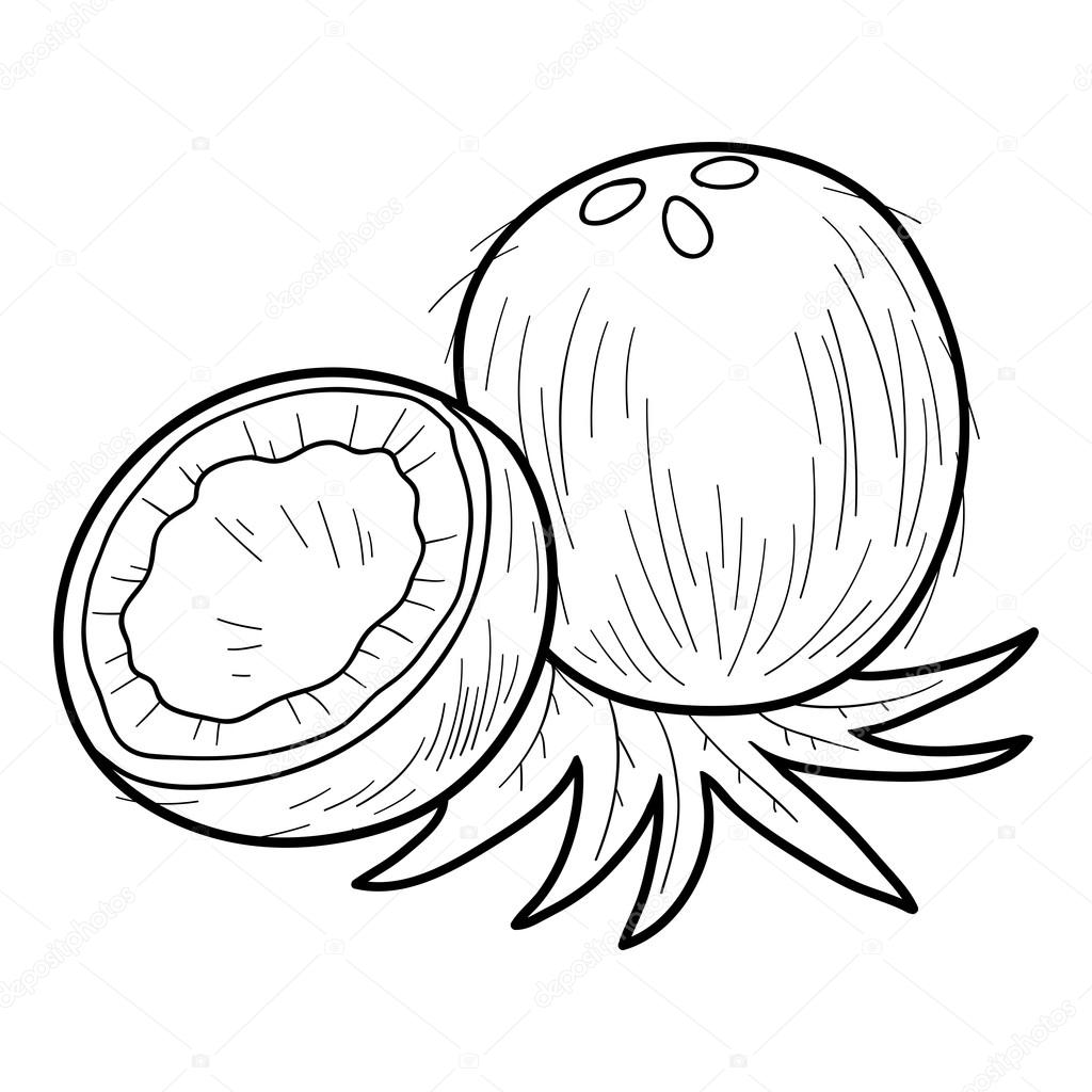 Coloring Book For Children Fruits And Vegetables Coconut Vector By Ksenya Savva