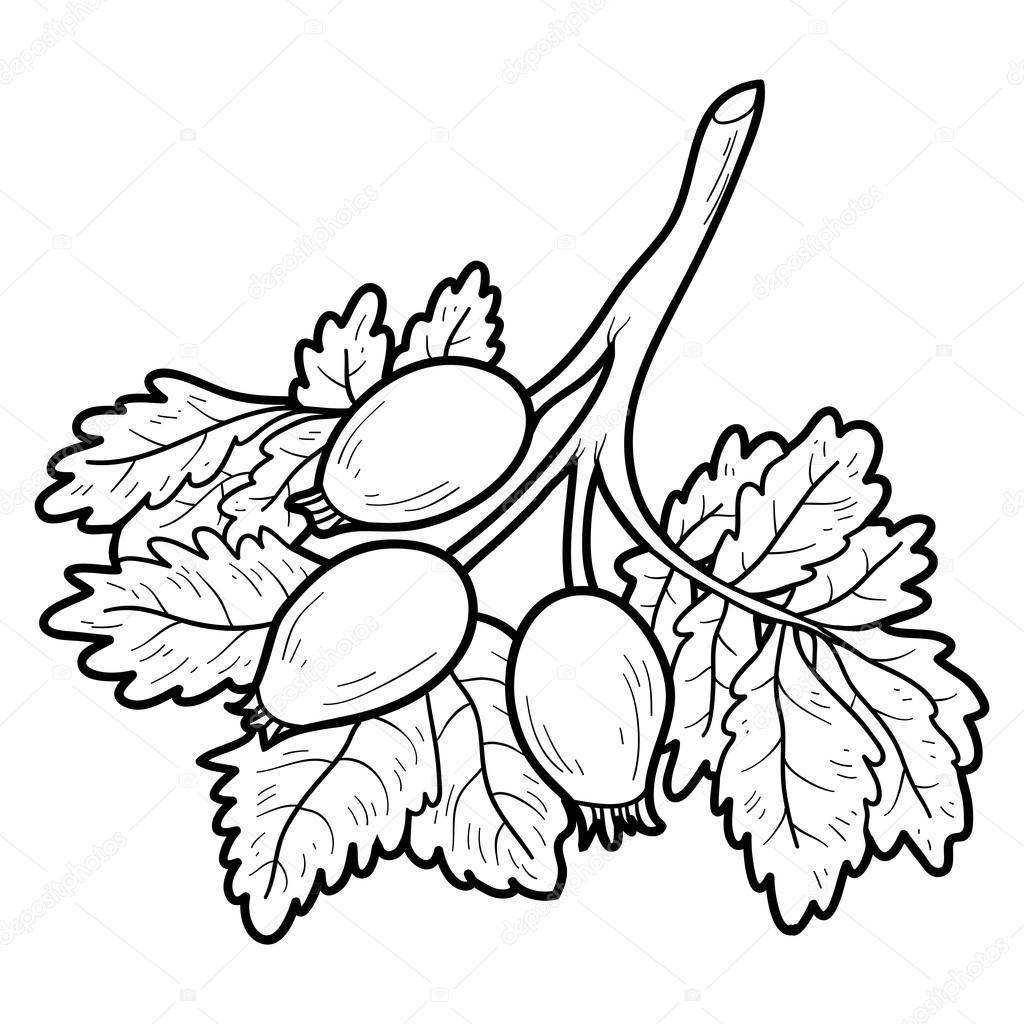 Книжка-раскраска: фрукты и овощи (плоды шиповника ...