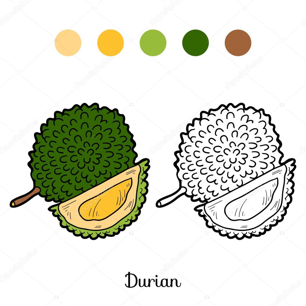Coloring book game: fruits and vegetables (durian) — Stock Vector ...