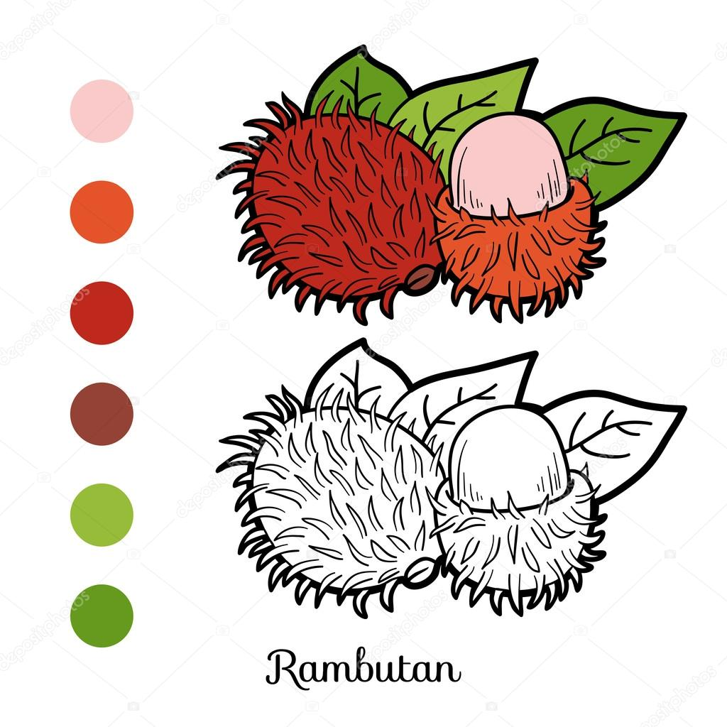 Coloring book game: fruits and vegetables (rambutan)