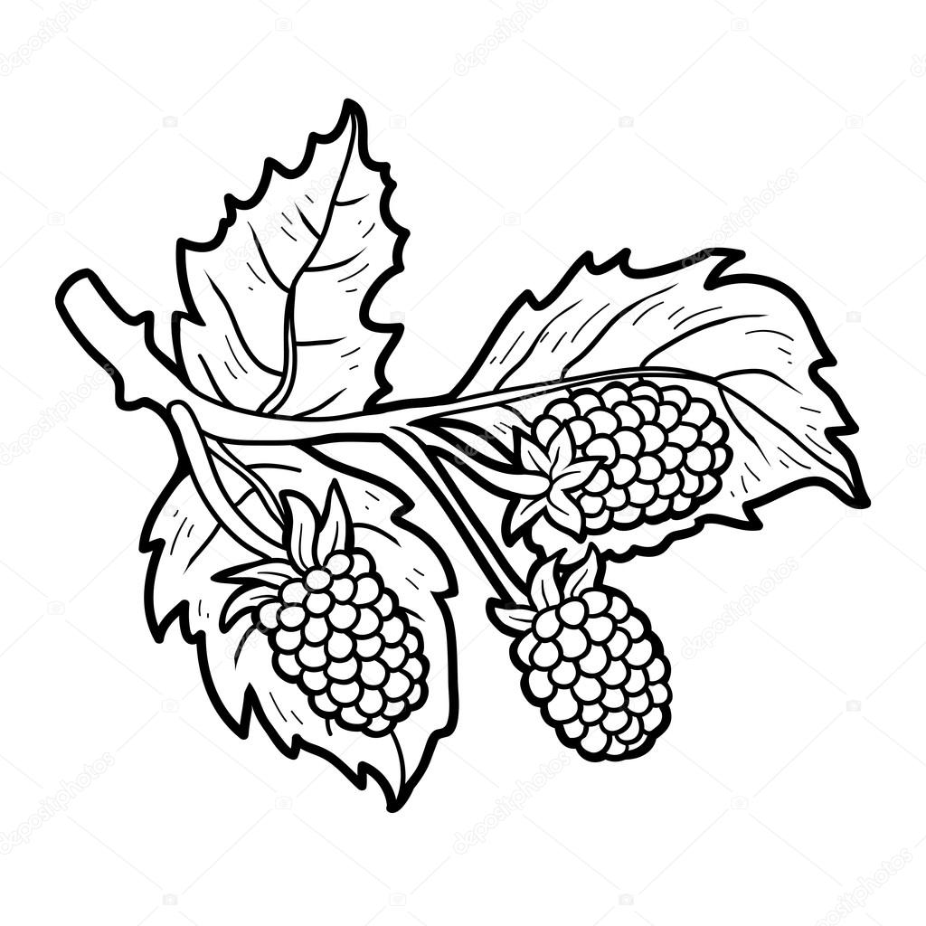 Coloring Book For Children Fruits And Vegetables Blackberries Vector By Ksenya Savva