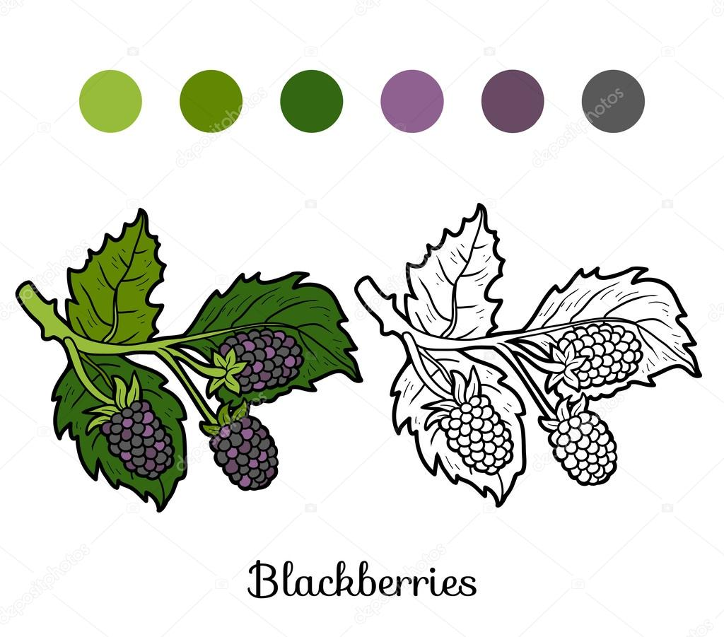 Coloring book: fruits and vegetables (blackberries)