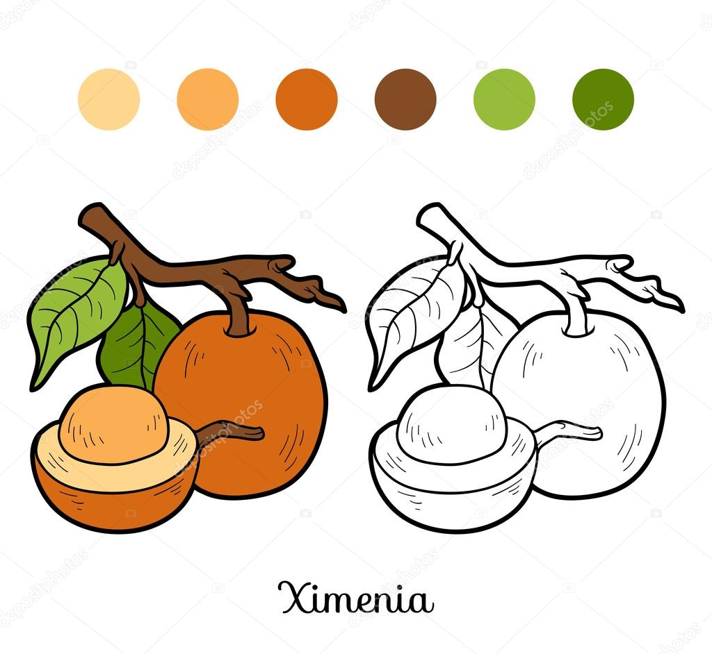Coloring book for children: fruits and vegetables (ximenia)