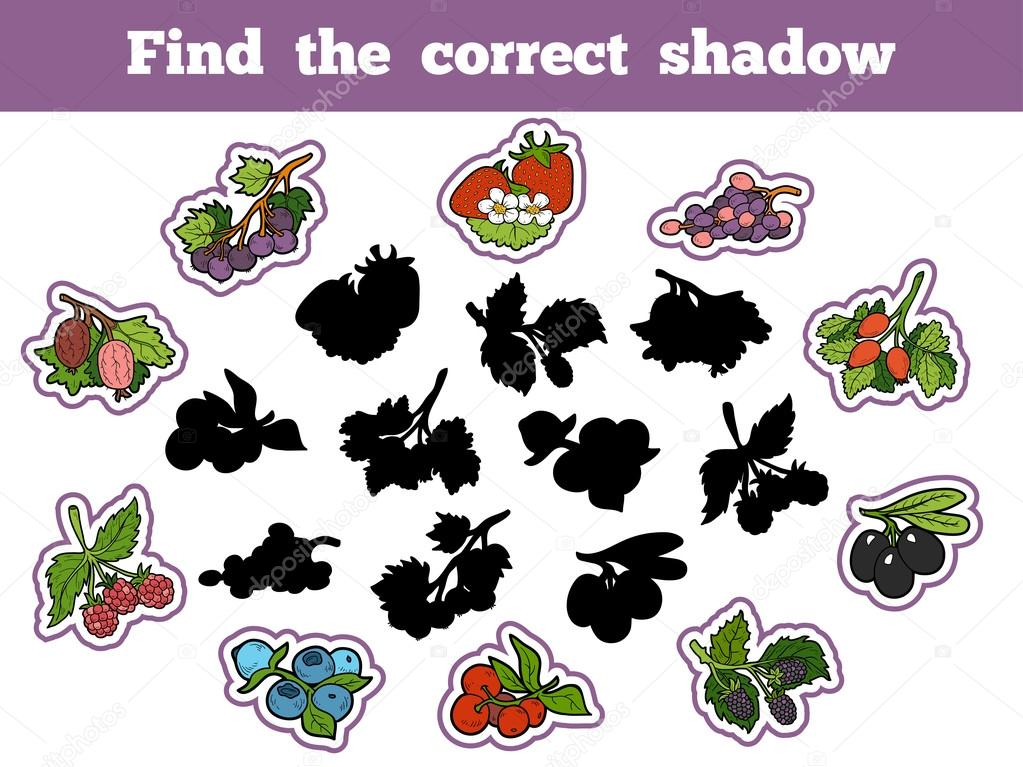 Find the correct shadow (berry and fruits)