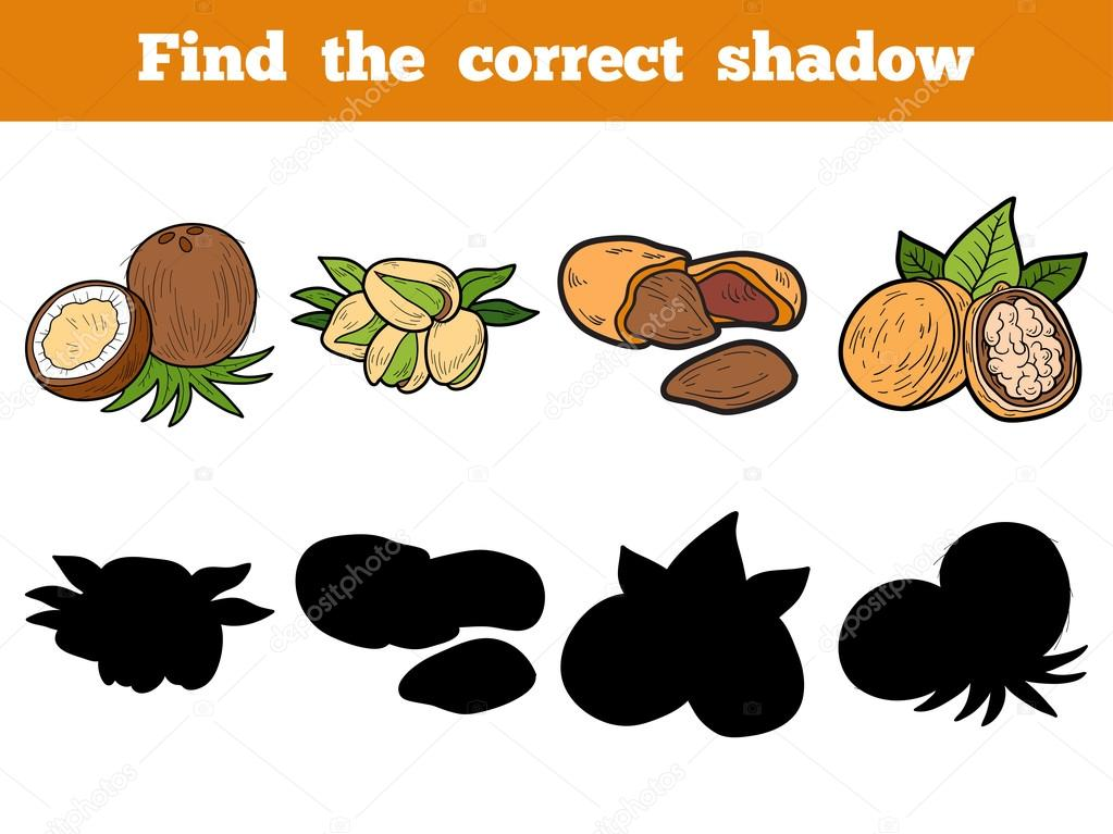 Find the correct shadow: nuts