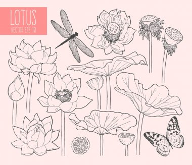 Set of lotus flowers and leaves