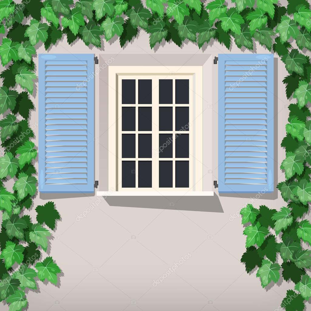 Grape vine and window