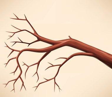 Bare tree branch