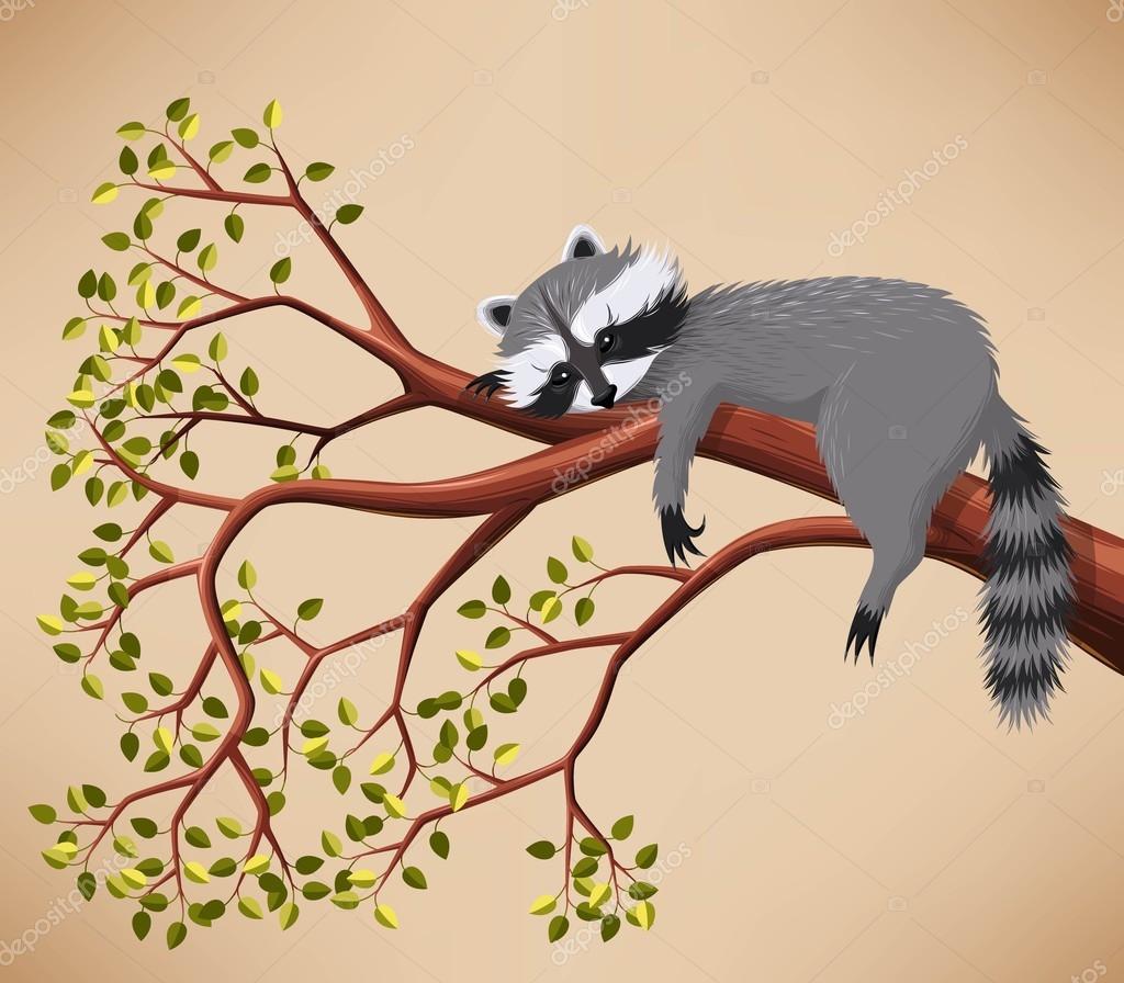 Raccoon on the tree