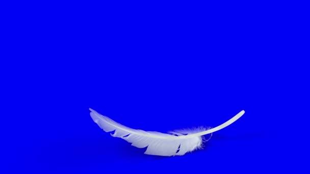 Falling Feather Element mit Chroma Key und Alpha Channel Maske in 4K Zeitlupe