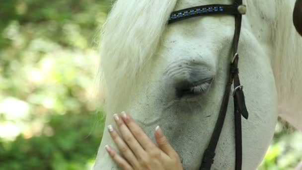 The girl pats horse head