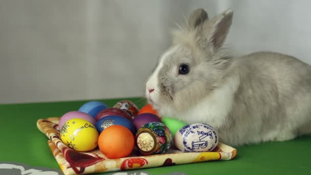 Velikonoční zajíček s velikonoční vajíčka