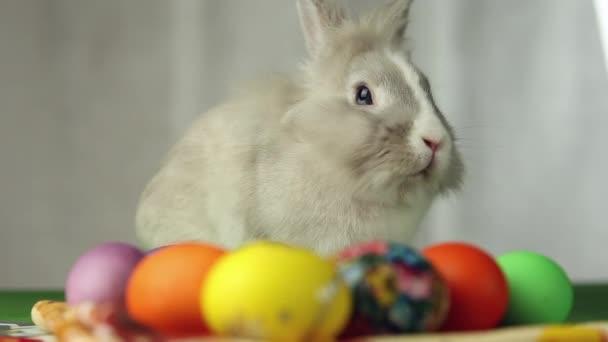 A húsvéti tojás húsvéti nyuszi