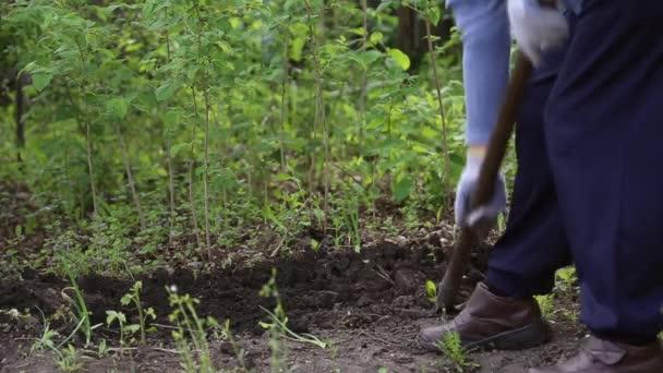 Žena, kopání lopatou v zahradě