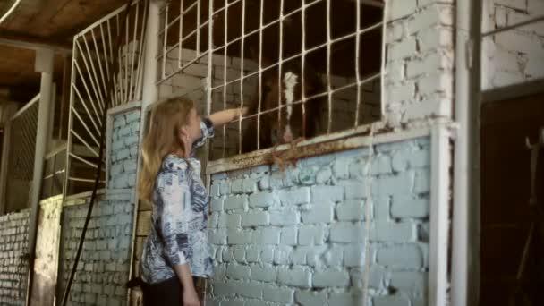 Dívka ve stodole s koňmi