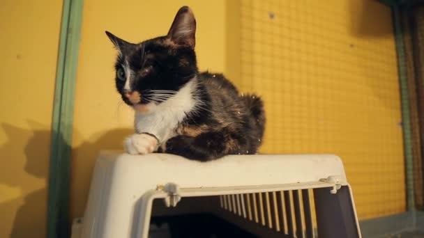 Tierheim, Katze ohne ein Auge