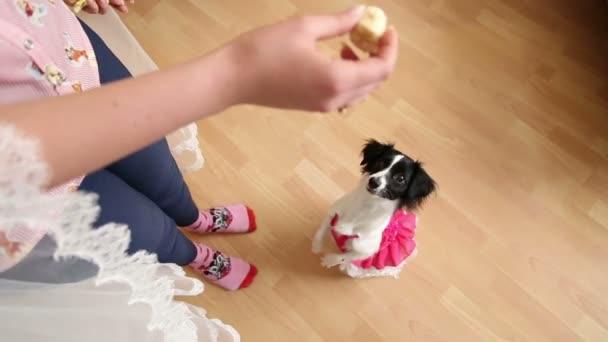 Hund, betteln um Nahrung von der Gastgeberin