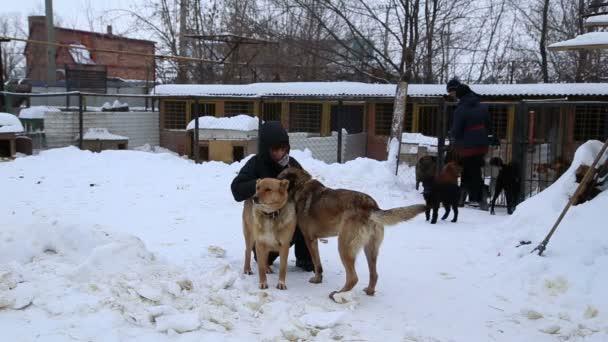 Tierheim, Ehrenamtliche umarmen Hunde