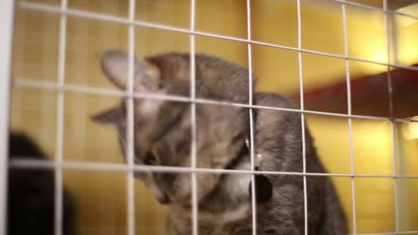 Animal shelter, cats waiting for their new owners