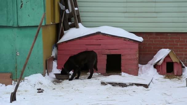 Tierheim: Hund frisst in der Nähe des Hundehauses aus der Schale