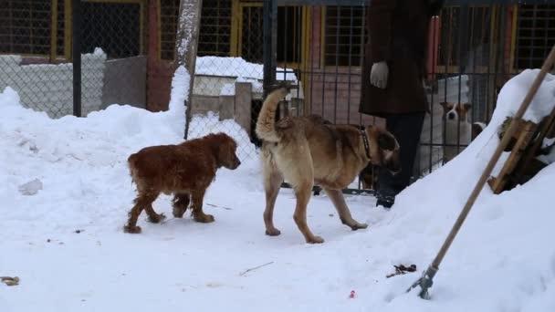 Tierheim, Ehrenamtliche umarmen Hund ohne Bein